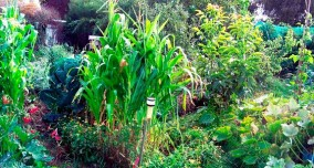 definition-permaculture