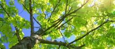 La santé des arbres