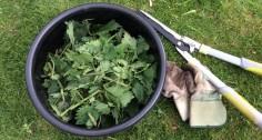 Purins de Plantes - Mode d'Emploi