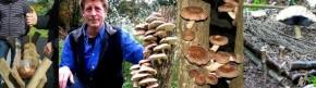 Atelier de culture de champignons sur bûche