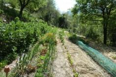Jardin bio intensif