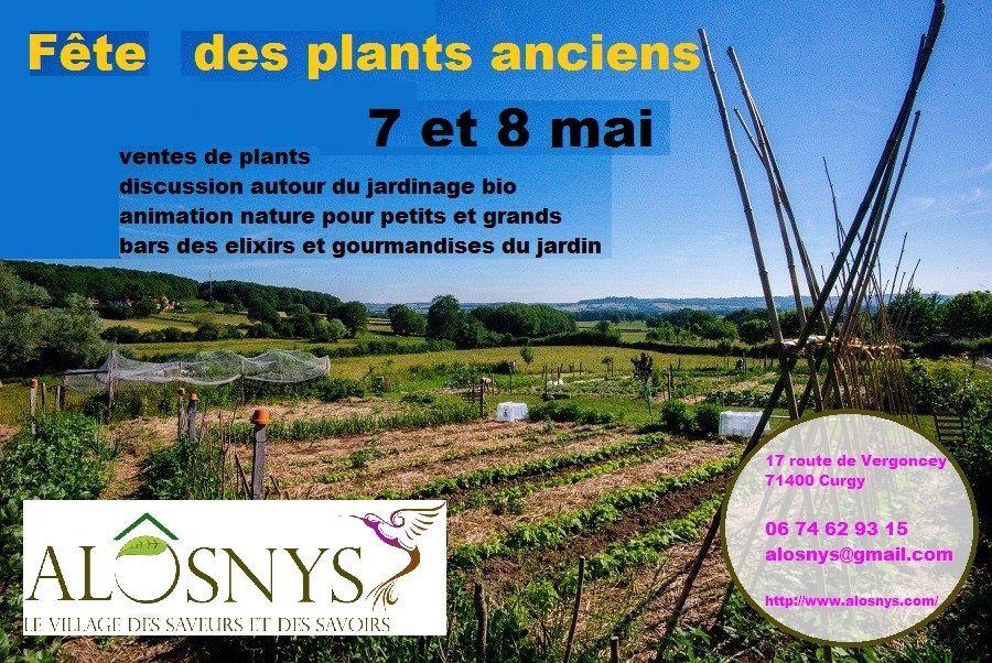 Lutter contre les paraistes dans le potager permaculture for Lutter contre les vers des salades
