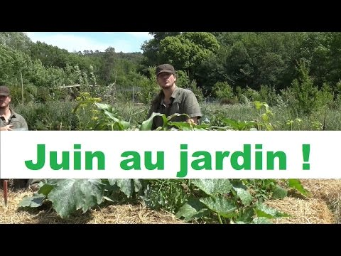 que faire au jardin en juin permaculture. Black Bedroom Furniture Sets. Home Design Ideas