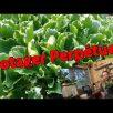 permaculteurs_2016-11-24_18-15-25.jpg